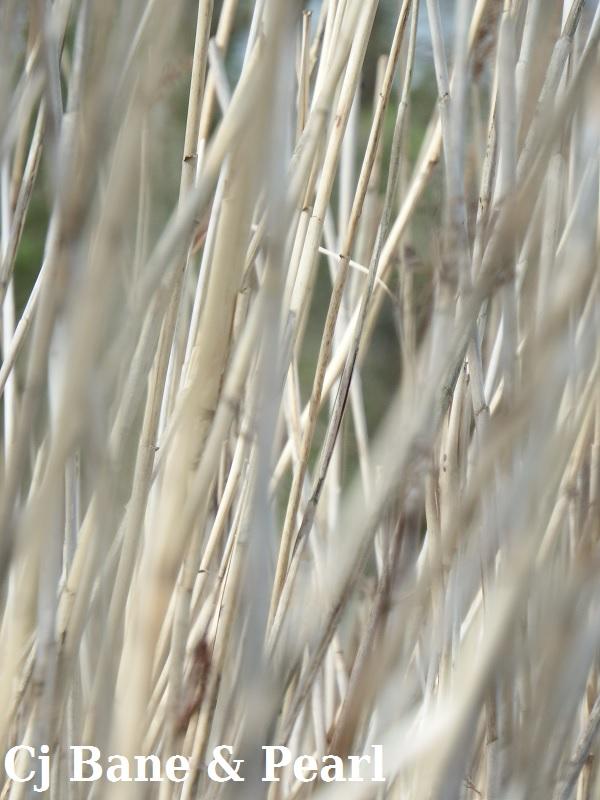 Färger_Bamboo